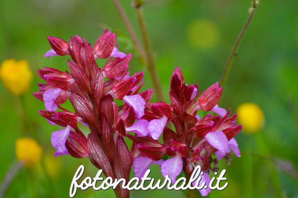 fotonaturali-fiori-15a10