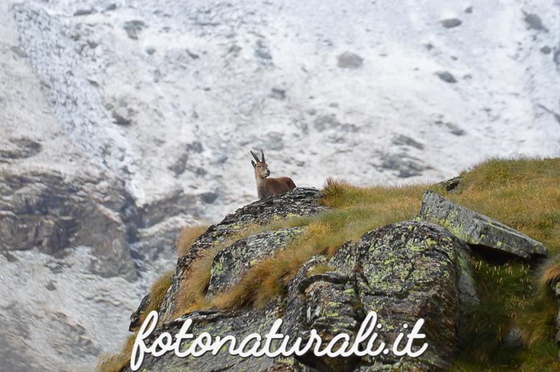 fotonaturali-granparadiso2-15a30