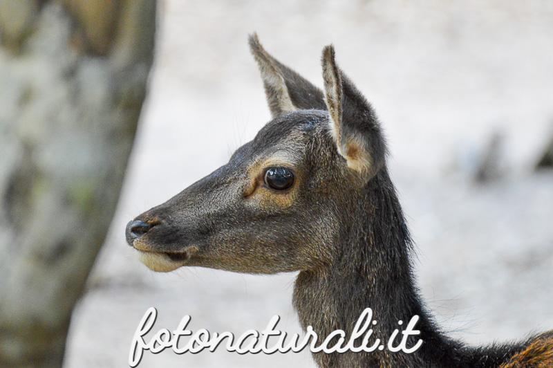 fotonaturali-cervo-15a27