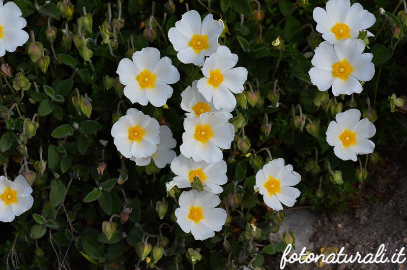 fotonaturali-fiori-16a14