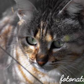 La voce di un Gatto