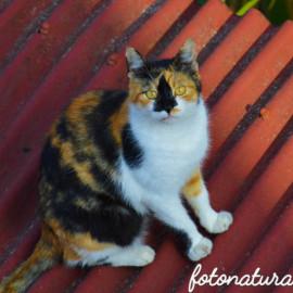 Il gatto (felis  catus). Felini si nasce…Coraggiosi si rinasce