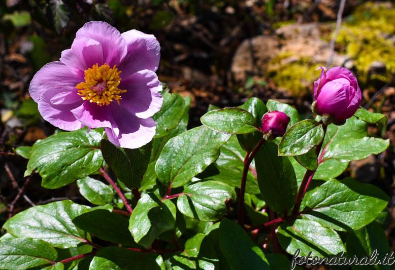 fotonaturali-fiori-18a06