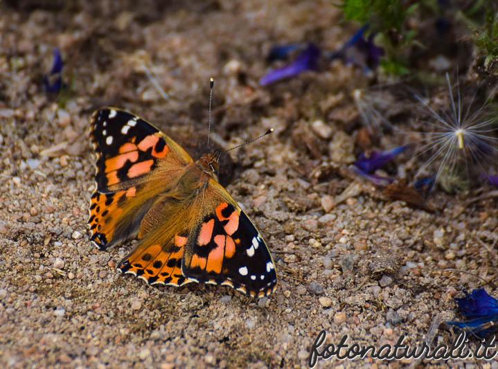 fotonaturali-insetti-18a02