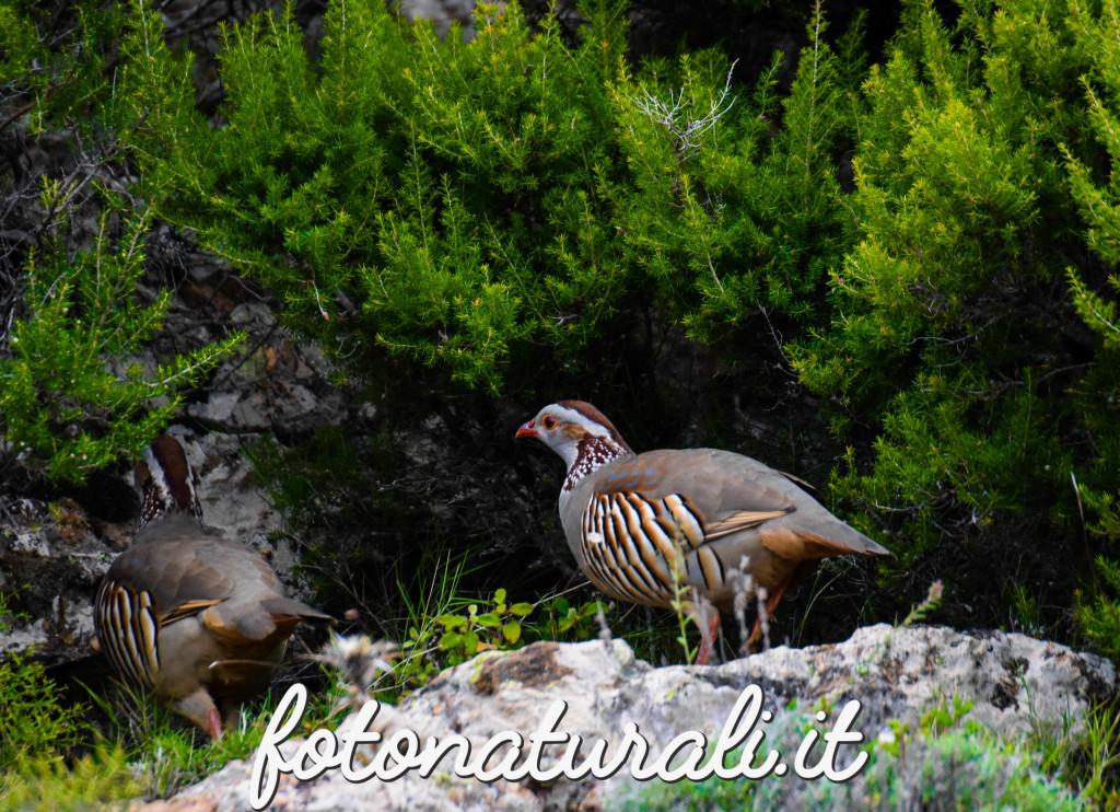 fotonaturali-pernicesarda-18a12