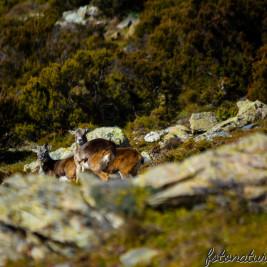"""Nel selvaggio Cuor della Sardegna… l'idillica """"Valle del Muflone"""""""
