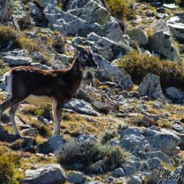 Vita Sarda. Il rifugio del Muflone