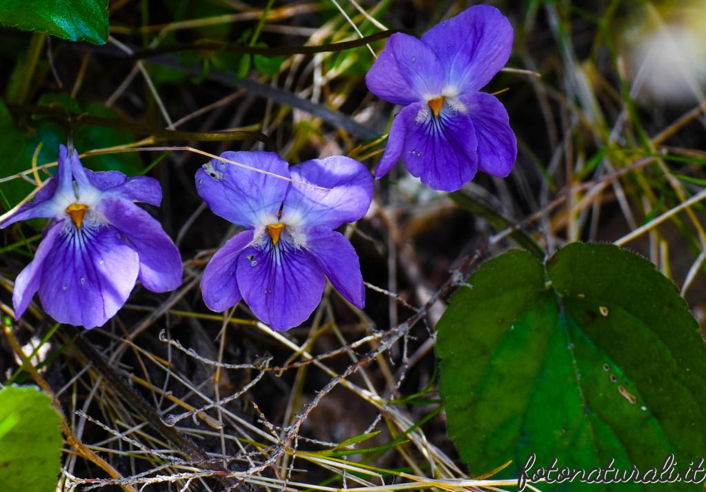fotonaturali-fiori-19a29