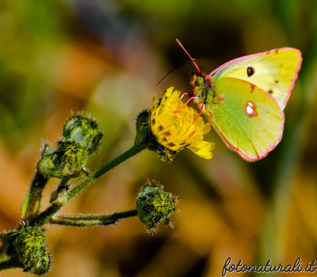fotonaturali-insetti-19a04