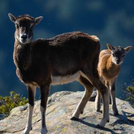 Amar la Natura… senza confini. SARDEGNA