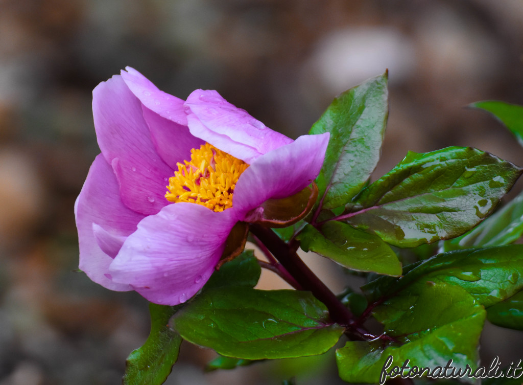 fotonaturali-fiori-19a35