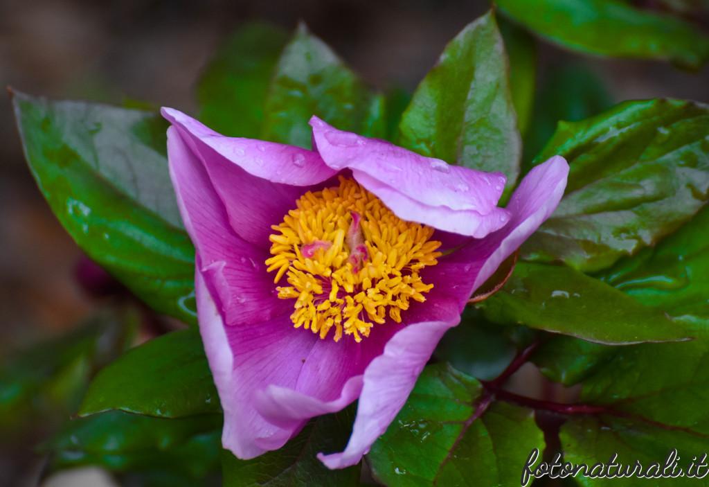 fotonaturali-fiori-19a41