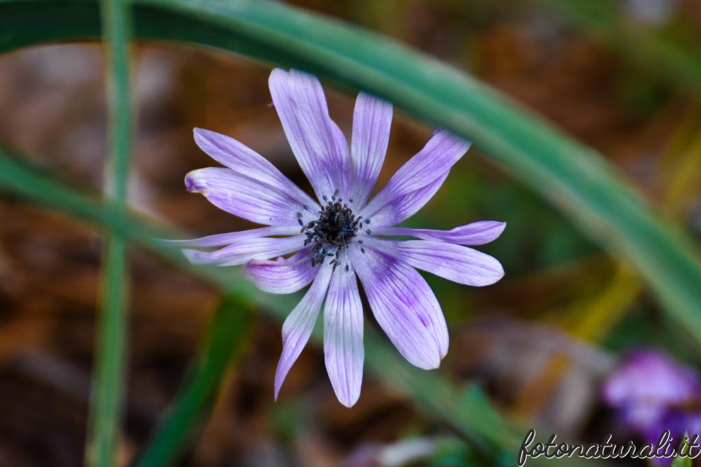 fotonaturali-fiori-19a51