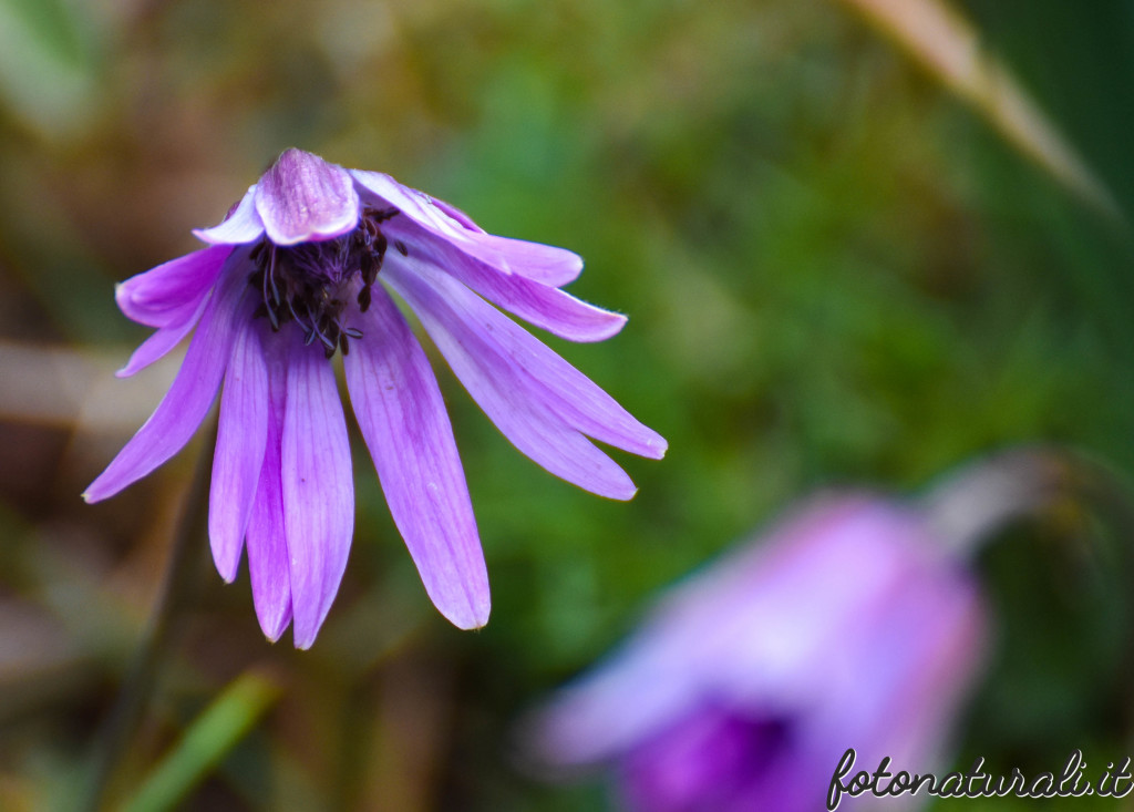 fotonaturali-fiori-19a52