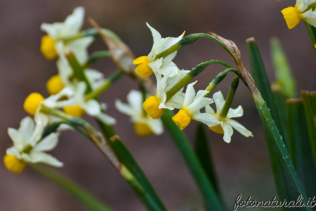 fotonaturali-fiori-19a53