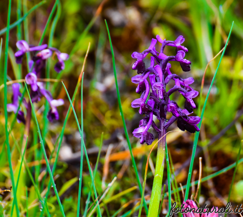 fotonaturali-fiori-19a57