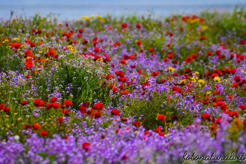 fotonaturali-fiori-19b07