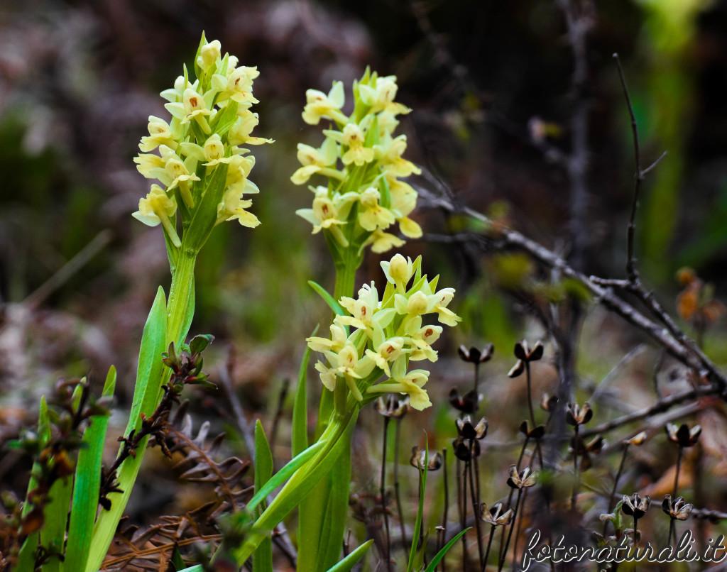 fotonaturali-fiori-19b19