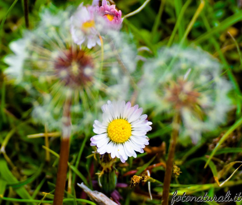 fotonaturali-fiori-19b25