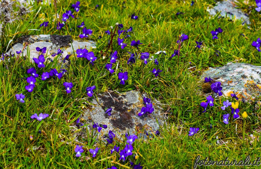 fotonaturali-fiori-19b27