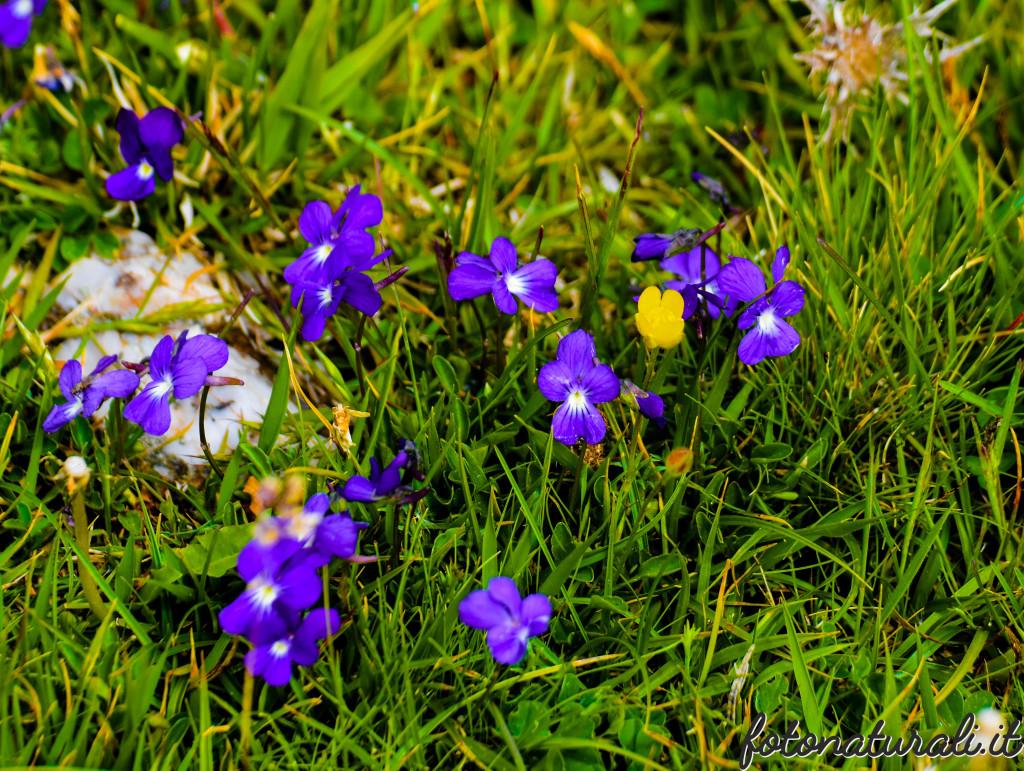 fotonaturali-fiori-19b28