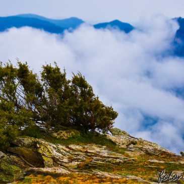 Il Sentiero della LIBERTÀ… Dinamica Sardegna