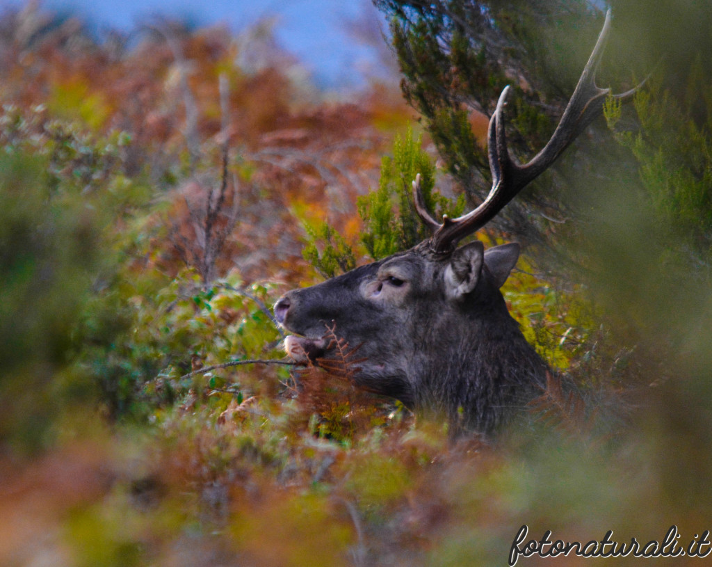 fotonaturali-cervosardo-19a22