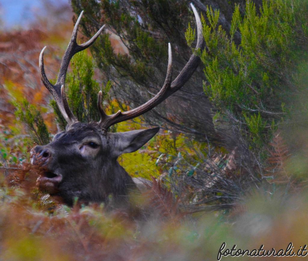 fotonaturali-cervosardo-19a35