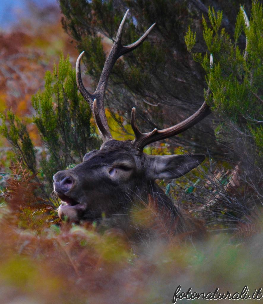 fotonaturali-cervosardo-19a44