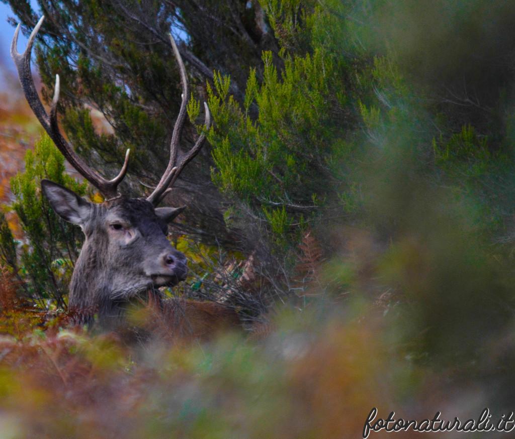 fotonaturali-cervosardo-19a47