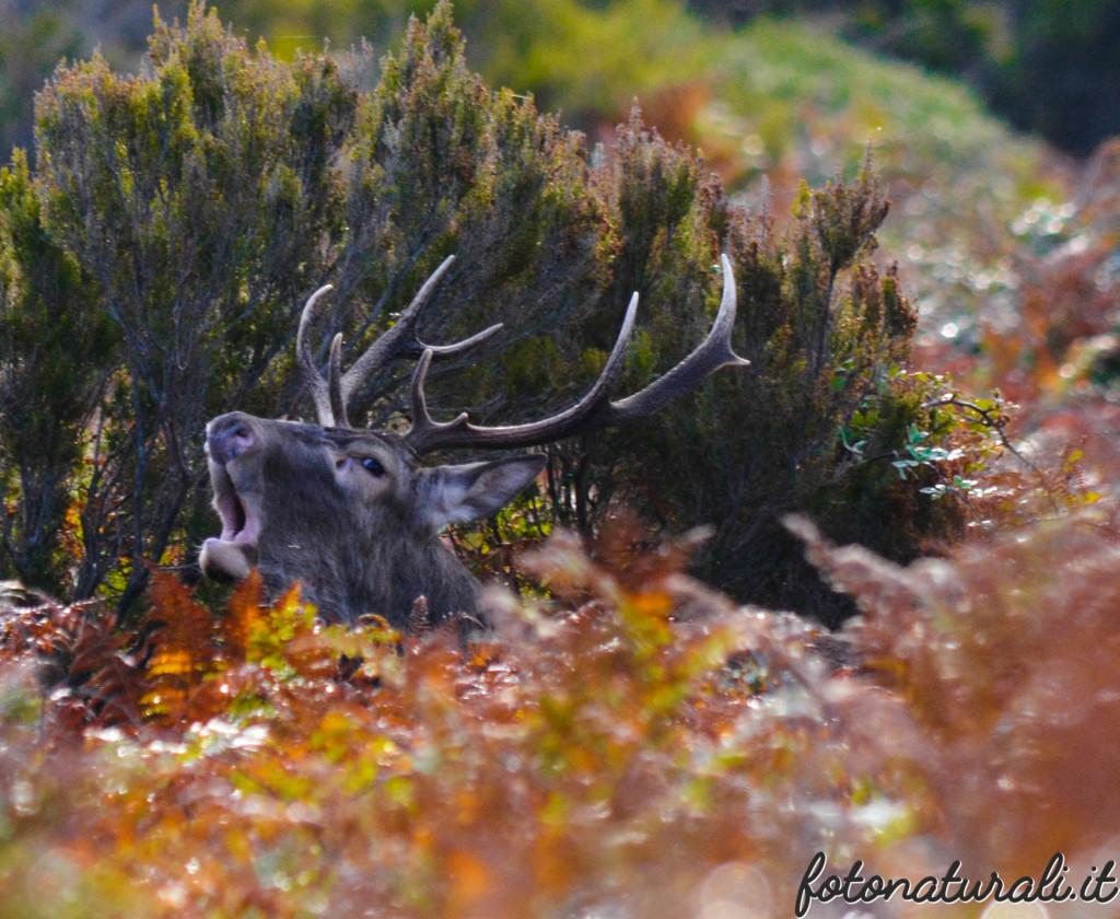 fotonaturali-cervosardo-19a48