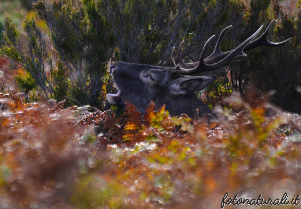 fotonaturali-cervosardo-19a49