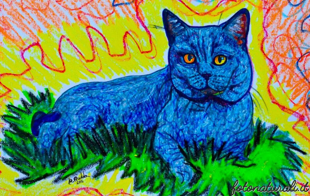 gatto-3